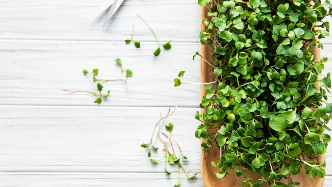 Easy Tips For Growing Arugula Microgreens At Home