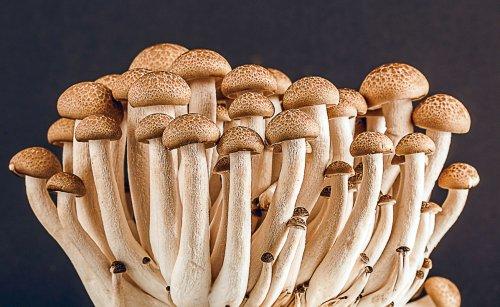 Tips For Growing Mushrooms Indoors - The Green Garden Life