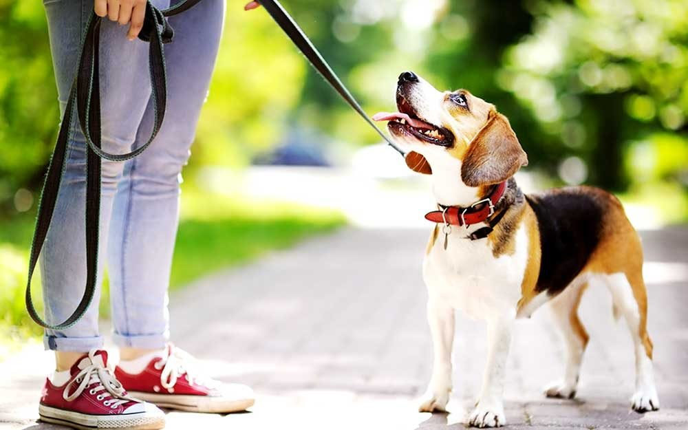 Why Owning a Dog Has MAJOR Health Benefits