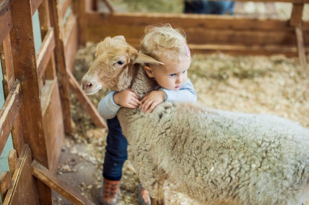 The Hidden Health Danger at Petting Zoos