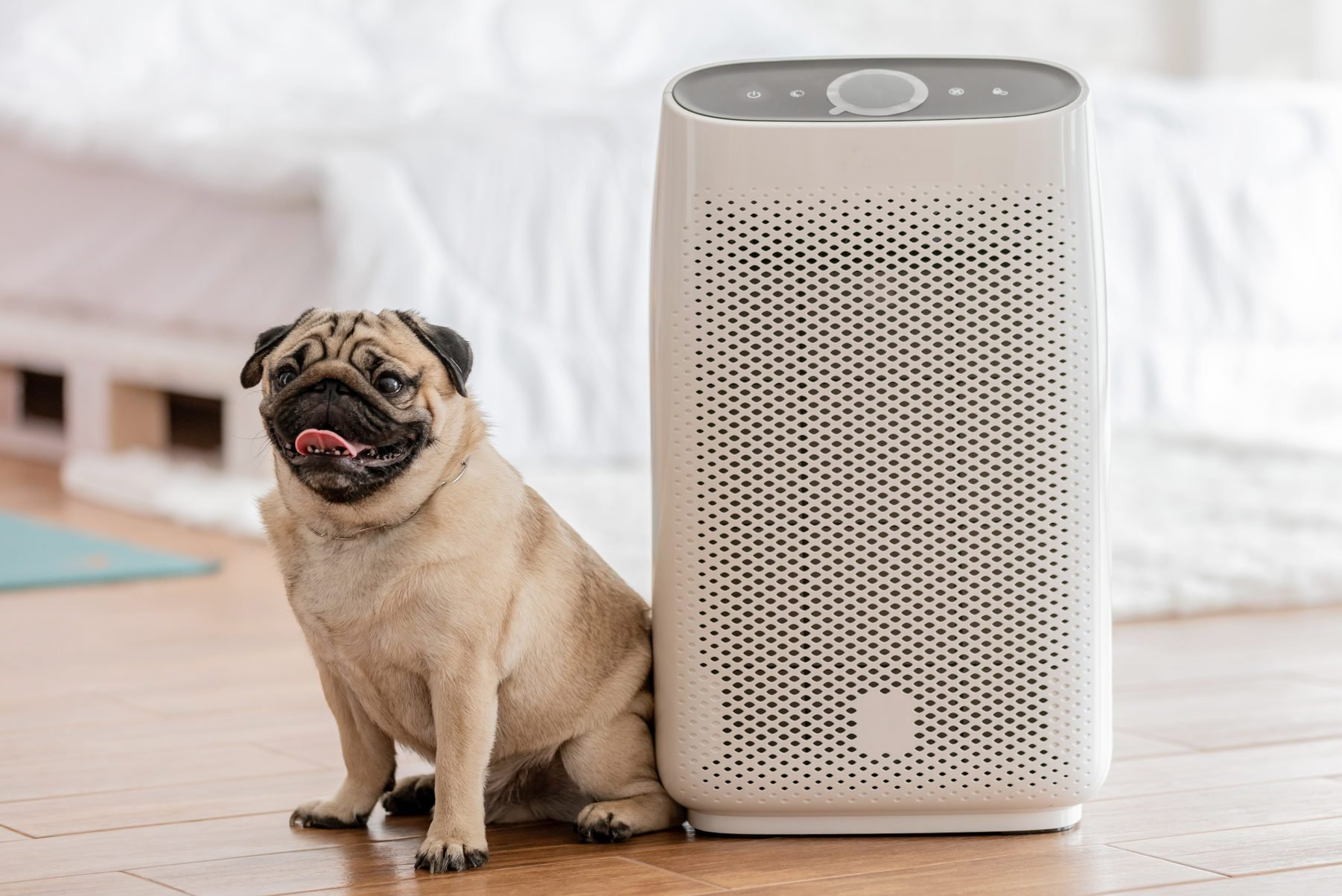 The 9 Best Air Purifiers for Pets