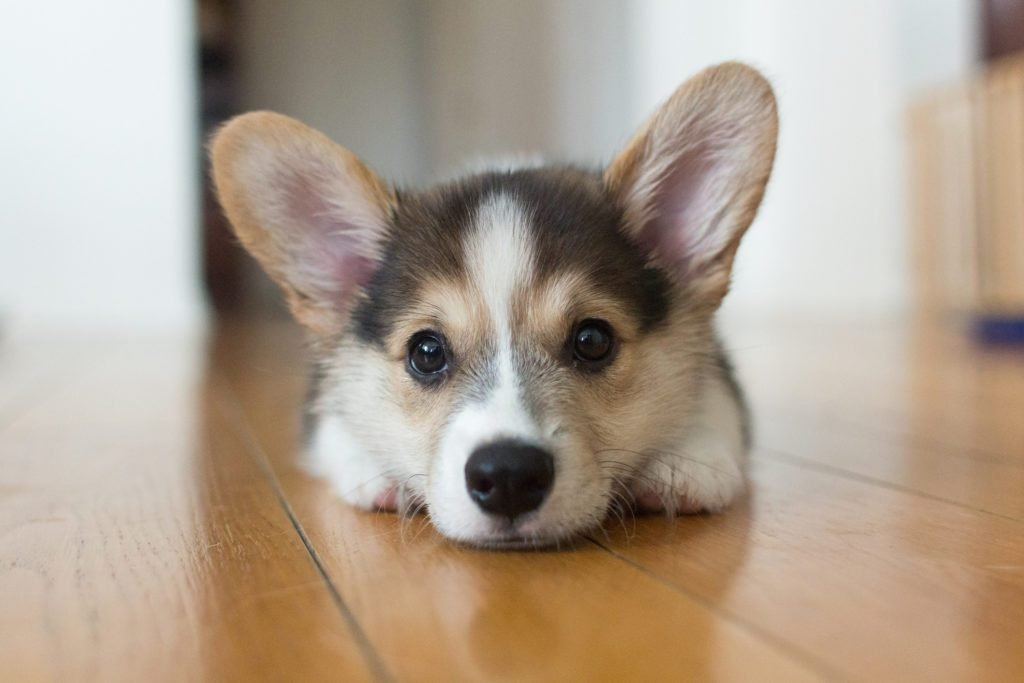 Why It Feels So Good to Look in Your Dog's Eyes