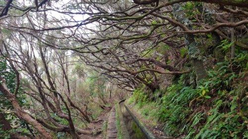 Die schönsten Levada Wanderungen auf Madeira