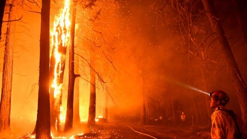 World's largest tree undamaged so far from fire
