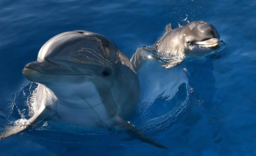 Louisiana researcher says she was fired for blowing whistle on project that killed hundreds of dolphins