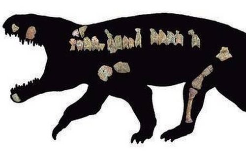 Meet Bharitalasuchus tapani, a carnivorous reptile that lived 240 million years ago