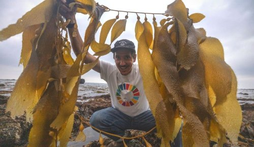 After 90% of California's Kelp Forests Were Destroyed, SeaTrees Is Restoring Them