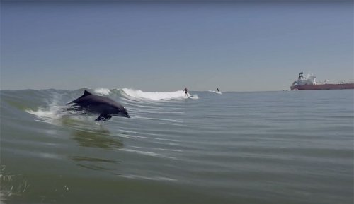 Dylan Graves Went Tanker Surfing With Dolphins