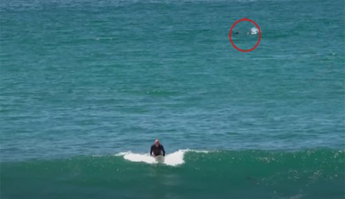 The Surfing Was Fun in San Diego Until a Shark Cleared the Lineup   The Inertia