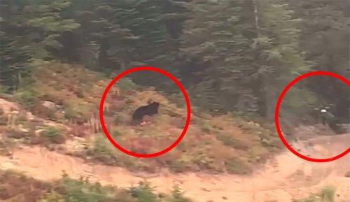Black Bear Caught on Camera Chasing Mountain Biker in Montana   The Inertia