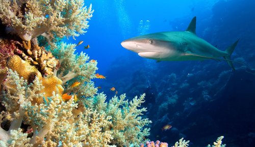 Marine Life Is Fleeing the Equator, Signaling Possible Mass Extinction