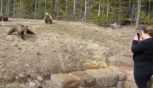 Woman In Yellowstone Bear Charge Video Sentenced to Jail Time