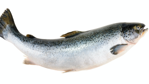 Eating this kind of fish every week could be a game-changer for your health