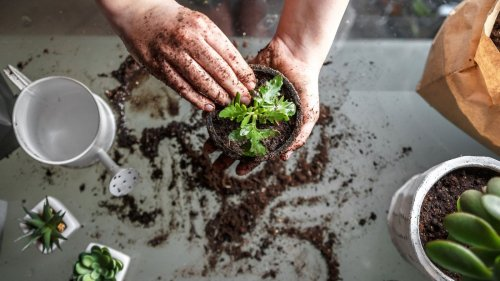 Does gardening really burn as many calories as yoga or volleyball?