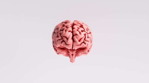 A neurologist's guide to your brain
