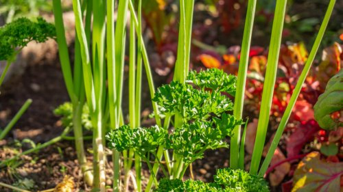 Plants You Should Be Growing Next To Each Other In The Garden