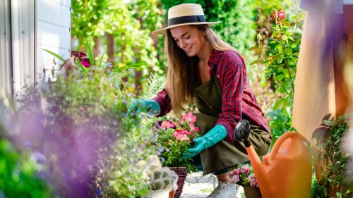 What To Plant In Your Garden To Keep Pests Away