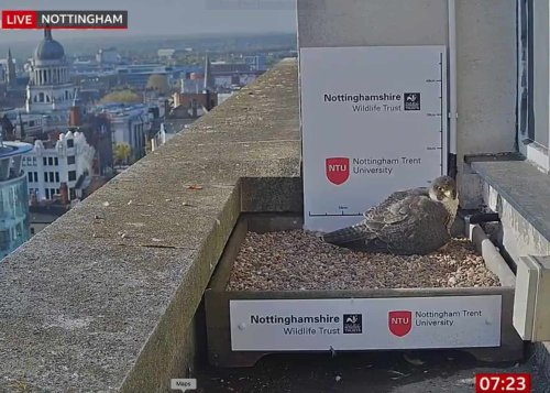 BBC run 'falcon's nest' story but ignore viral video calling out Government lies