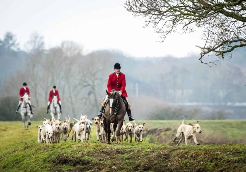Two-year-old girl dies after falling from a pony during hunt