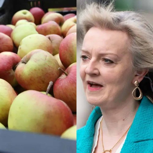 Liz Truss tried to boast about exporting apples to India. It didn't go well.