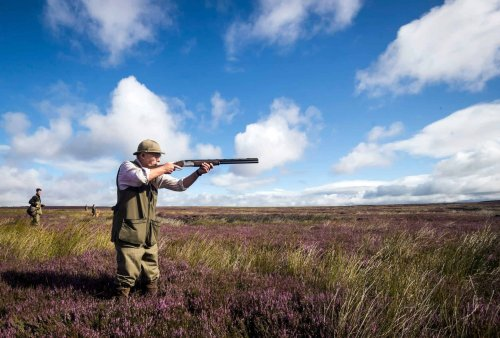 Protected moorland twice the size of Greater London devoted to raising grouse...so people can shoot them
