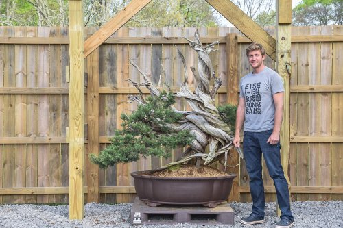 America's Youngest Bonsai Master Is Flourishing in His Native Soil | The Manual