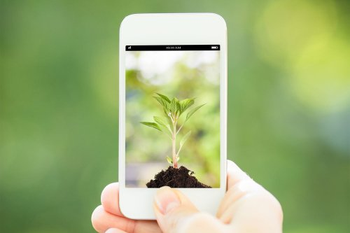 The Best Apps for Identifying Unknown Plants and Critters | The Manual