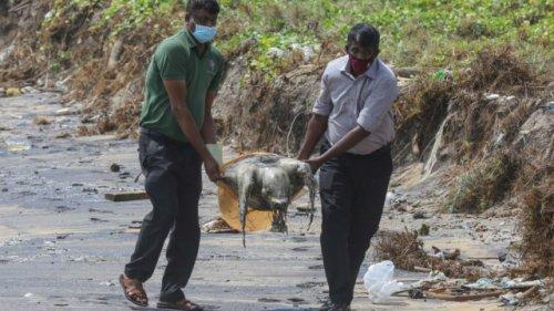 Dead animals wash ashore in Sri Lanka after X-Press Pearl ship fire