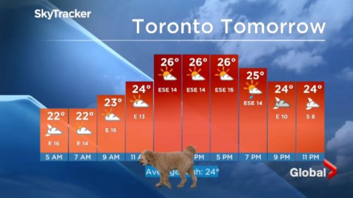 Cloudy with a chance of canine, as cute dog interrupts weather report