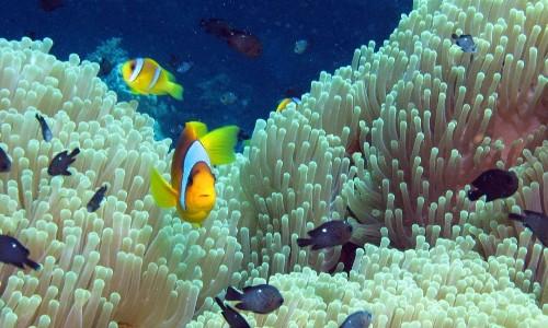 台灣「曾經」引以為傲的珊瑚礁魚類 30年來大量銳減! - The News Lens 關鍵評論網