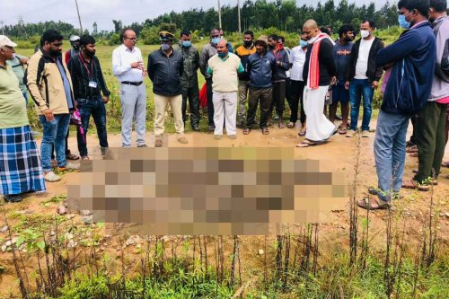 Bonnet macaques killed in Karnataka's Hassan district, probe underway