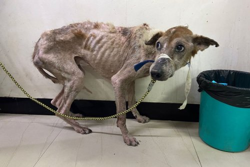 Skin infection, bones visible: Three more dogs at IIT-M found severely malnourished