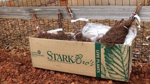 Now's the time to stock up on bare root trees, shrubs and roses for your landscape