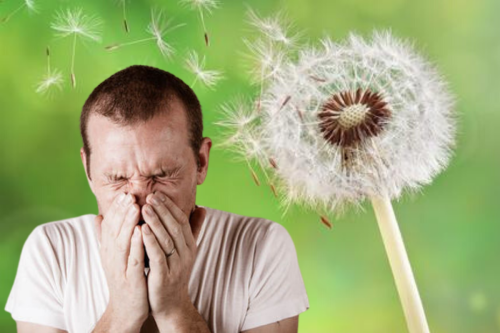 5 'miracle' home remedies to ease even the most horrendous HAY FEVER symptoms