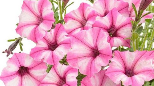 Here are some new plant varieties that will brighten up your container gardens