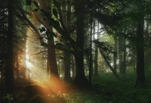Kilian Schönberger Reveals the Beauty of Europe's Fantasy-Like Forests