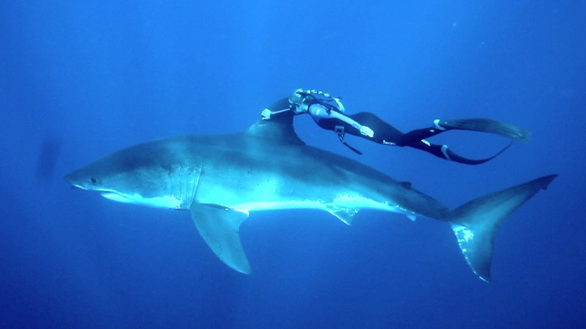 """Diver Ocean Ramsey """"Swims with Sharks"""" to Promote a More Positive Image of These Animals - The Phoblographer"""