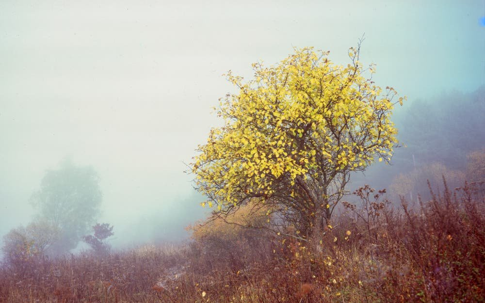 These Beautiful Landscape Photos by Michal Gurnik Look Like Paintings