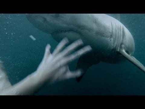 Man Jumps Into Water With GoPro Attached...Right Next to a Great White Shark - The Phoblographer