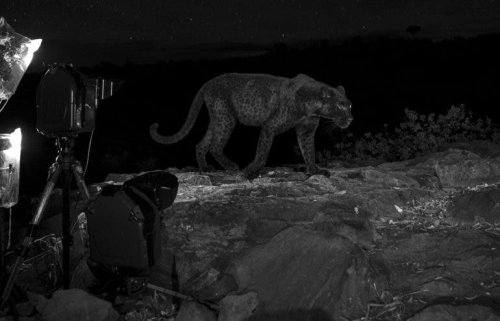 Living for the Thrill: The Photographer Who Searched for a Rare Cat, and More