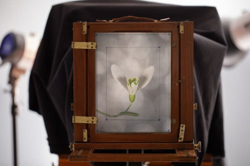 Markus Hofstaetter's Macro Photography Using Two Wet Plate Cameras
