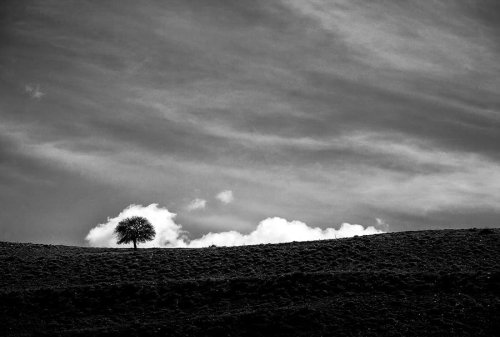 The Passion Of Trees: A Story of Photographer Ali Shokri's Love of Nature