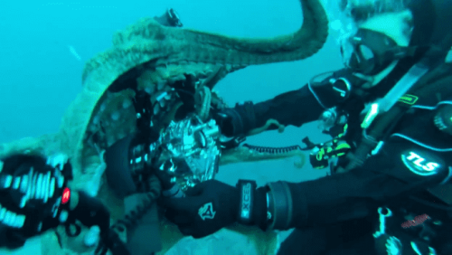 Caught on Tape: Giant Pacific Octopus Wrestles with Diver for Underwater Camera - The Phoblographer