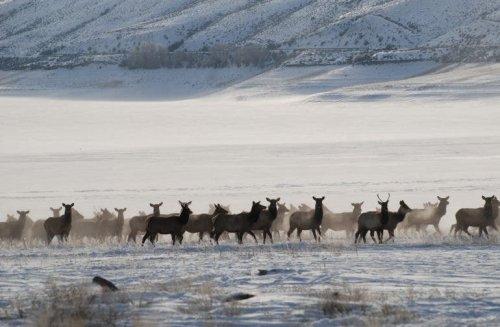 Teresa Golden Showcases the Captivating Wildlife of the Colorado Rockies