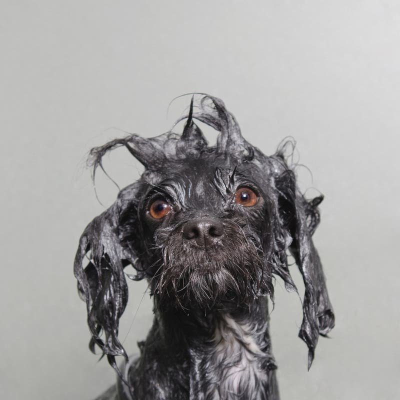 This Quirky Dog Portrait Series Takes Bath Time to a Whole New Level - The Phoblographer