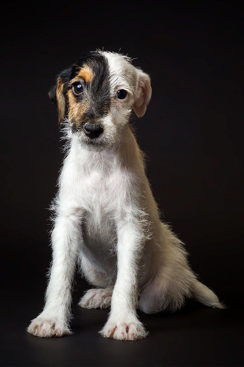 Mario Olvera Molinar Photographs The Cutest Puppies