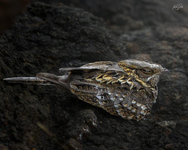 Kunal Shah Captures the Astonishing Beauty of India's Birdlife