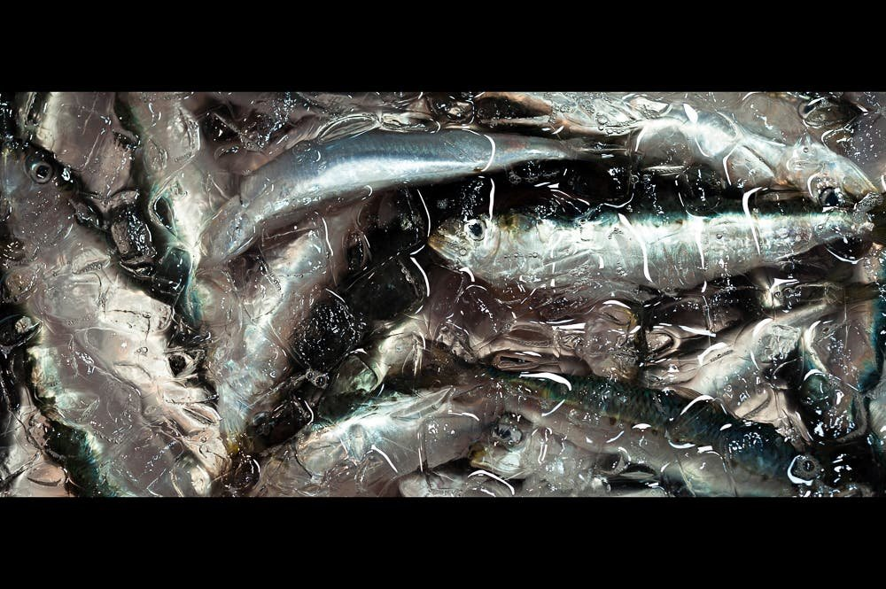 Pierre Melion's Documentary Photos of a Vanishing Japanese Fish Market