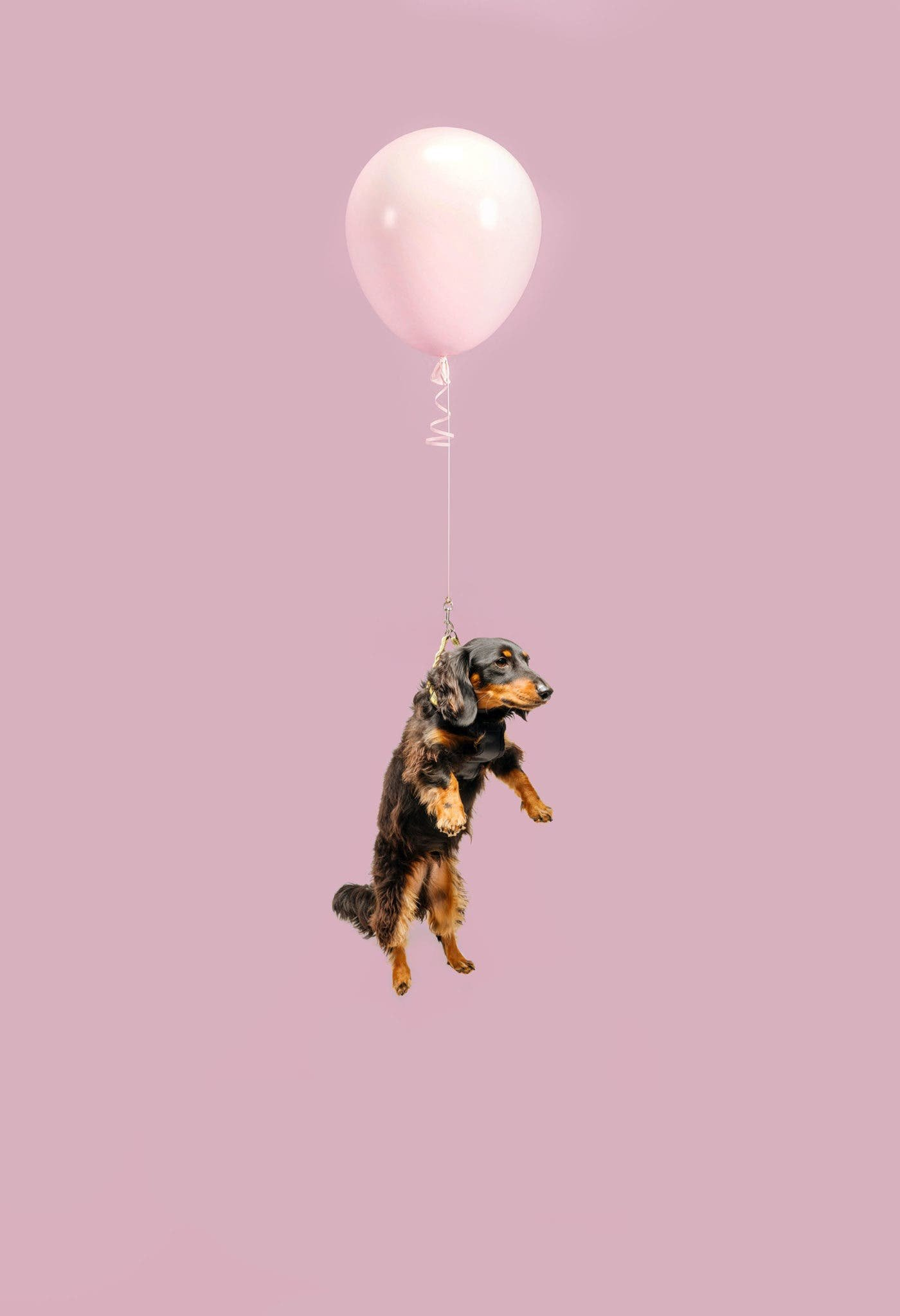 """Ian Pettigrew Aims for Smiles With His """"Floating Dogs"""" Project"""