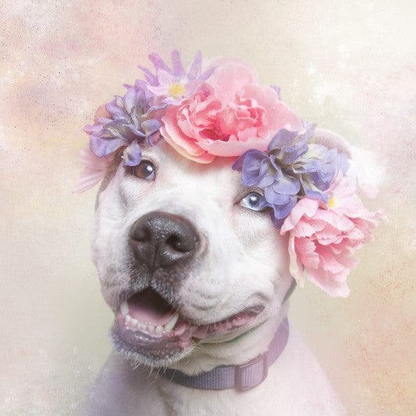 Flower Power Puts Pit Bulls in a Whole New Light